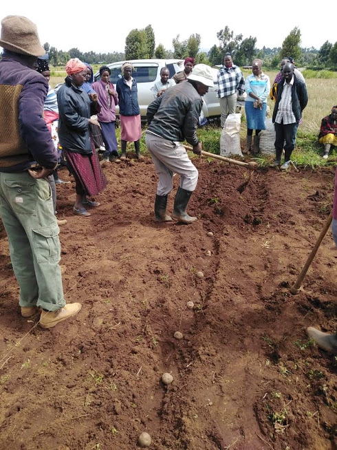 Mr.Kariuki the agriculture extension officer demonstrating to members of Maritati self help group on the proper spacing of potatoes