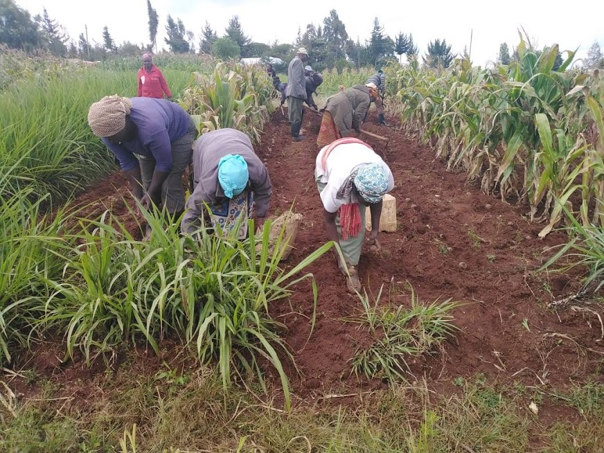 Mugumone self help group members planting potatoes according to the recommended spacing